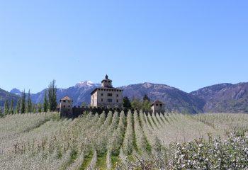 Ville d'Anaunia Castel Nanno fioritura melo foto Giuseppe Mendini