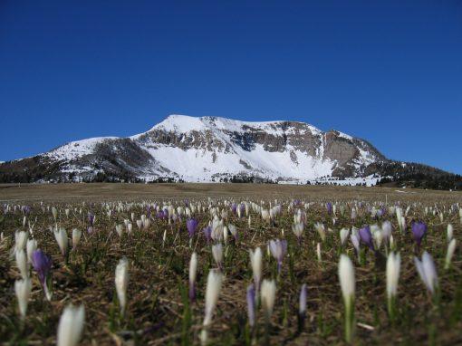 Giro del Monte Peller | Val di Non