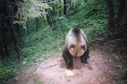 sito sperimentale ricatture orsi (Arch.PNAB)