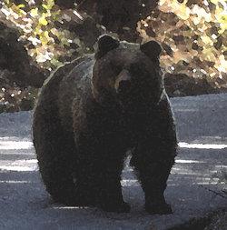 fotografia elaborata dell'orsa Daniza nel Parco (G.Volcan)