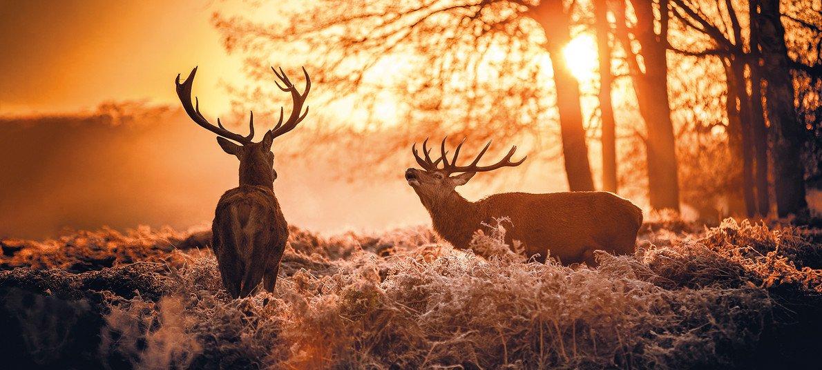 Nel bosco di notte per ascoltare il bramito del cervo: 27 settembre, 4 e 5 ottobre