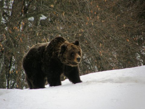 Hai visto l'orso? Aiutaci a conoscerlo meglio!