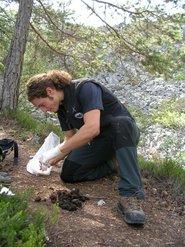 guardaparco che raccoglie fatte di orso (E.Dorigatti)