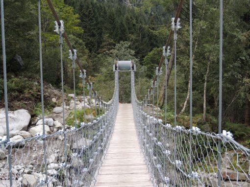 Tutto il bosco in un sentiero | Val Borzago