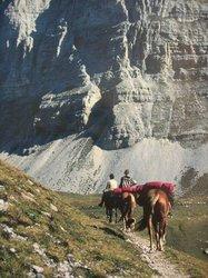 Dolomiti di Brenta Horse