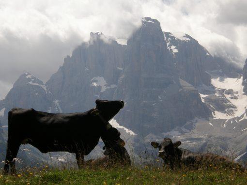 Sugli Alpeggi della Rendena | Malga Bandalors