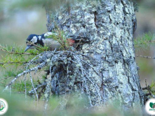 22 maggio e 24 maggio: Giornate della Biodiversità e dei Parchi