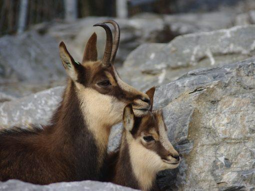 """""""BioMiti"""" e le altre: si consolida la ricerca scientifica del Parco Naturale Adamello Brenta"""