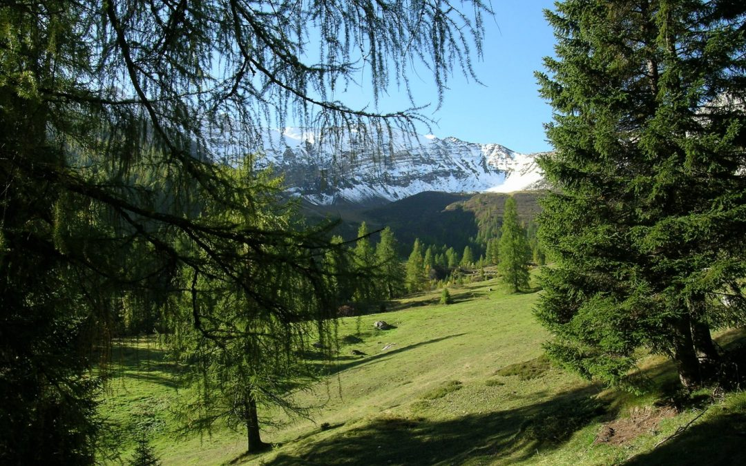 The  microcosm of the Adamello Brenta Park, large and small are of equal importance