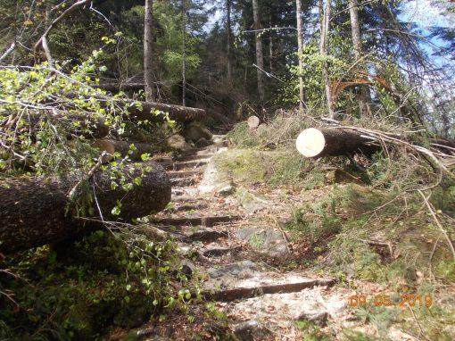 Il Parco al lavoro per il ripristino dei sentieri danneggiati da Vaia