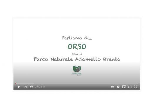 Parliamo di… ORSO con il Parco Naturale Adamello Brenta