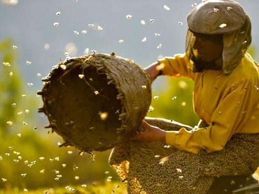 EXTRA RASSEGNA: Honeyland – Fai della Paganella 9 agosto