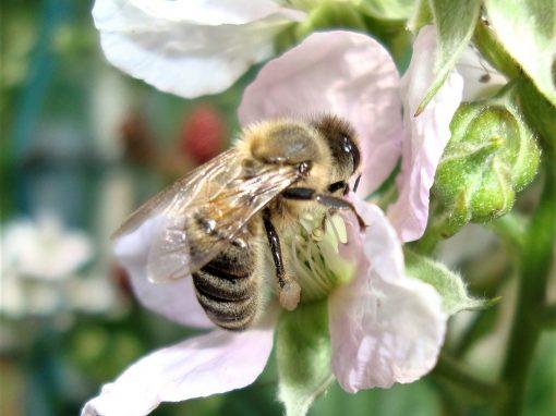 Al servizio delle api