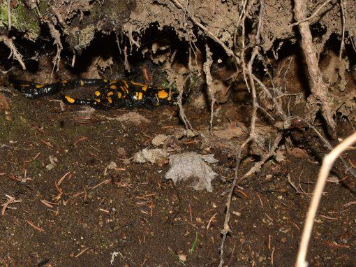 10. Martedì 7 dicembre – I funghi che non ti aspetti. L'invisibile nel sottosuolo