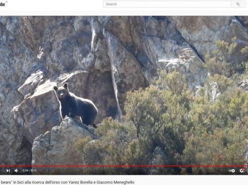 """""""Soul bears"""" – il racconto di un viaggio alla ricerca dell'orso"""